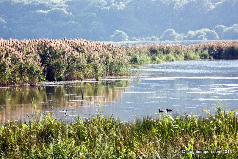Agriturismo sul lago di vico viterbo e i monti cimini la - La finestra sul lago viterbo ...